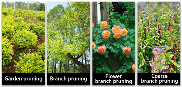 Applications of hand tree pruners