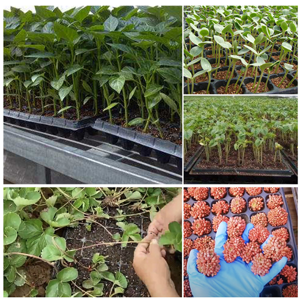 Applications of plant growing trays