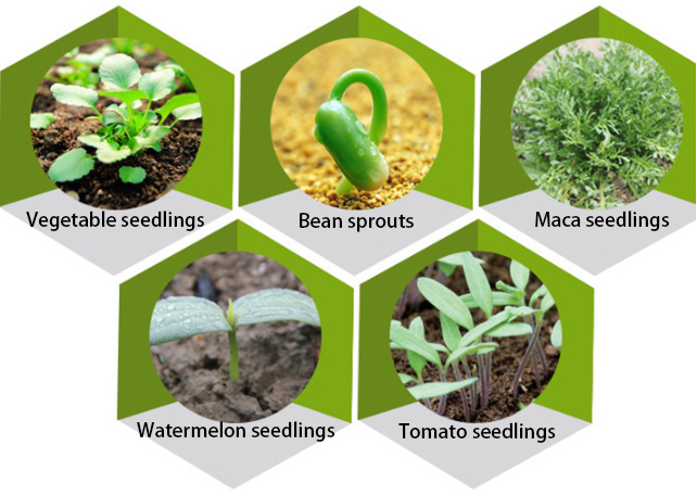 Applications of seed trays